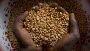 India Offers To Buy N367bn Pulse Beans From Nigeria